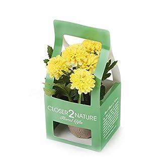 Closer To Nature FP002CC – Crisantemo artificial en caja de regalo, 18 cm