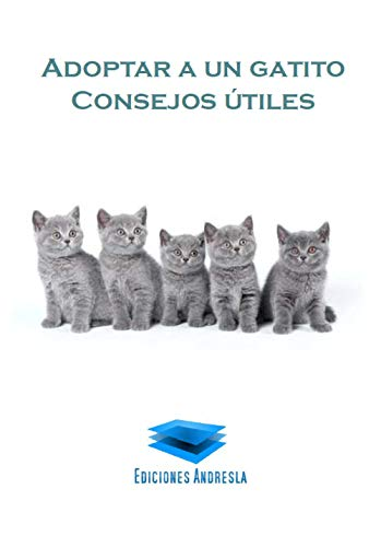 Adoptar un gatito: Consejos útiles por Paradais Sphynx