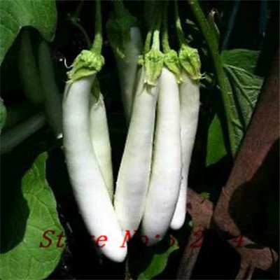 Vente! 100 Long White Aubergine Seeds-Facile à cultiver-Green Graines de légumes