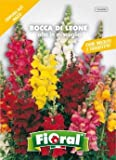 Sementi da fiore di qualità in bustina per uso amatoriale (BOCCA DI LEONE ALTA IN MISCUGLIO)