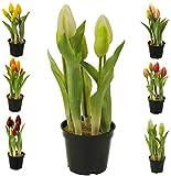 Künstliche & Realistische Tulpe im Topf – Höhe: 26cm - Große Auswahl - Hochwertig & Gefühlsecht - Kunstpflanze (Creme, Geschlossene Blüten)