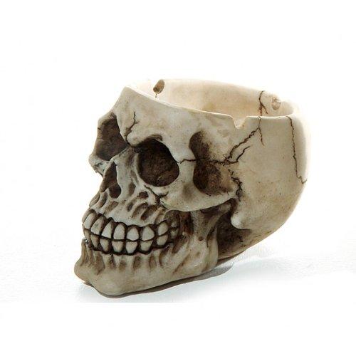nkopf-Look aus Polyresin ca. 10cm, Halloween Dekoration (Piraten Halloween)
