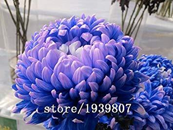 150 teile/beutel heißer verkauf parfüm Lila Glyzinien creepers Blumensamen für DIY schloss hausgarten blumentöpfe pflanzgefäße -