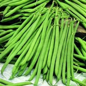 seekay-dwarf-french-bean-nautica-50-seeds-disease-resistant