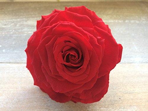 Decoflorales® - Echter, haltbarer, auf Glycerinbasis konservierter XXL-Rosenkopf, Durchmesser ca. 10 cm, Farbe rot