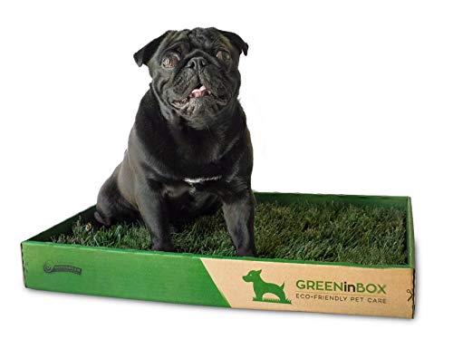 GreenInBox - Lettiera in Vera Erba