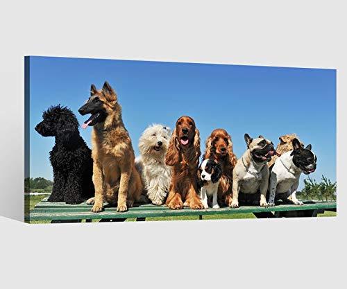 Leinwandbild Hunde Hund Hunderassen Tier Kat6 Pudel Leinwand Bild Bilder Tierwelt Wandbild Holz Leinwandbilder Kunstdruck vom Hersteller 9AB807, Leinwand Größe 1:80x40cm -