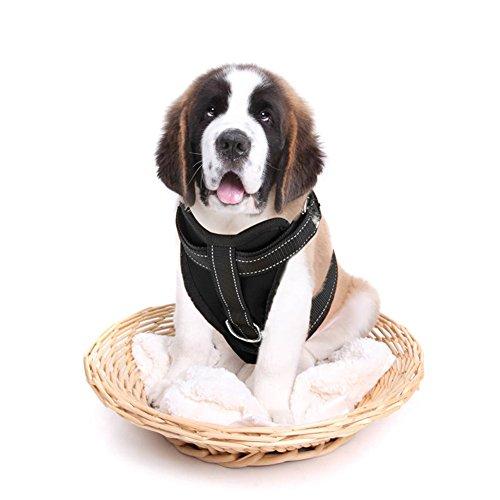 Hundegurt & Sicherheitsgeschirr,Anschnallgurt Hunde im Auto,Sicherheitsgurt Spaziergang,Schwarz,Xl