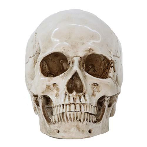 JHEY Halloween Harz Handwerk Schädel Ornamente, Simulation 1: 1 Medizinische Menschlichen Schädel Anatomie Probe Kreative Requisiten