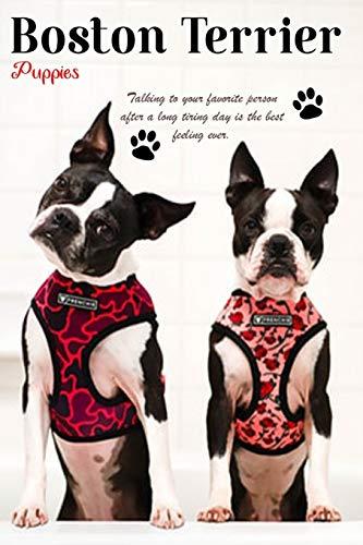 Boston Terrier Planner 2020 box: Cute Dogs Puppy Animals Roundheads American Gentleman, Baby Animals 2020 Box, Dog Breeds Terrier Puppies -