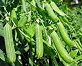 Farmerly Piselli, Thomas Laxton, Heirloom, Organico 20 + Semi, Ideale per insalate e Cucina