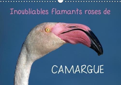 Inoubliables Flamants Roses De Camargue 2018: Les Flamants Roses Sont Des Oiseaux Magnifiques Et Majestueux Aux Couleurs Rares. Ils Sont Ainsi Devenus L'embleme Inoubliable De La Camargue !