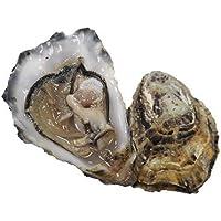 Cornish Versichert Austern x 24, Frische