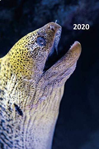 2020: Giant Moray Eel Cool Planner Calendar Organizer Daily Weekly Monthly Student for researching how to become a marine biologist