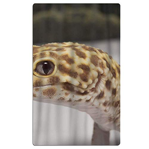 Not afraid Leopard Gecko Albino Beach Towel Soft Quick Dry Lightweight High Absorbent Pool Spa Towel for Adult 31 X 51 Inch Albino Leopard