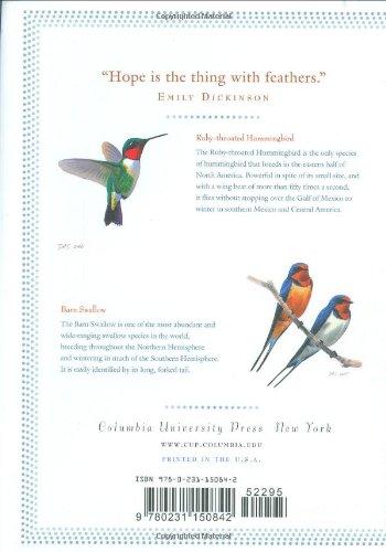 hummingbird poem emily dickinson