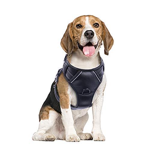 Hunde Laufgeschirre, Raffaelo Sport Hundegeschirr Haust… | 00711766999230