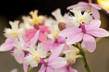 Feelingathome-STAMPA-ARTISTICA_x_cornice-Orchid-Coro-cm48x74-arredo-POSTER-fineart