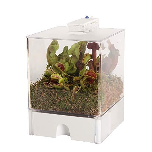 Swampworld Terrarium 3 fleischfressende pflanzen - 2-farbige Beleuchtung