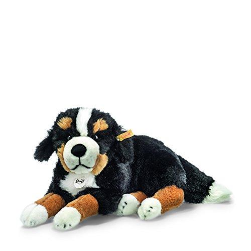 Senni Berner Sennenhund 45 liegend