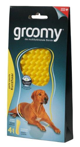 groomy Kurzhaar Hund