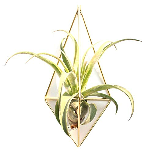 2 STÜCKE Metall Dreieck Hängen Pflanzenhalter Blumentöpfe Dreieck Blume Halter Geometrische Dreiseite Geometrische Wand Decor Container Vase Können Hängen Luftpflanze Ideal für Sukkulenten (Halter Wand Vase)