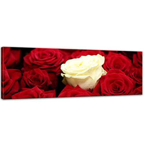 Kunstdruck - Weiße Rose - Bild auf Leinwand - 120 x 40 cm - Leinwandbilder - Bilder als Leinwanddruck - Pflanzen & Blumen - Natur - Weisse Rose - rote Rosen