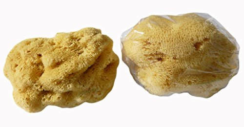 CROLL & DENECKE L100 - Spugna naturale a pori sottili, levantina dal Mar Mediterraneo, per la cura del viso, dimensioni: 10 cm