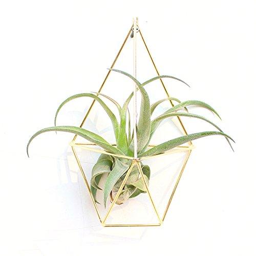 LianLe 2 STK Hängende Luft Pflanze Halter Dreieckig Topf für Airplant Tillandsia (Gold) - Pflanzen Leben, Luft,