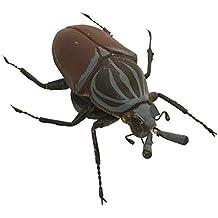 Suchergebnis Auf Amazonde Für Goliathkäfer Insekt