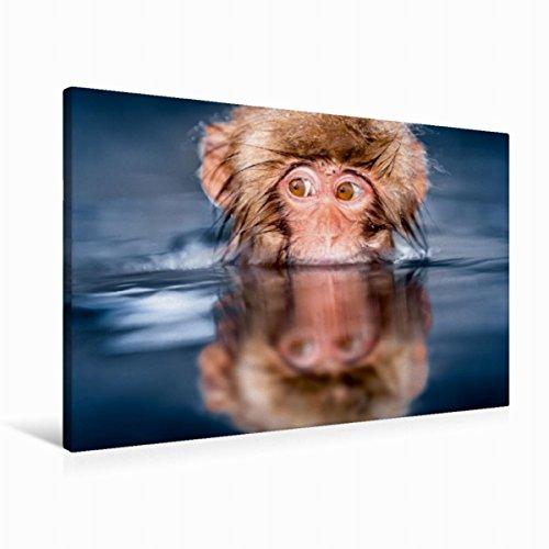 Premium Textil-Leinwand 90 cm x 60 cm quer Affenbaby auf Tauchstation | Wandbild, Bild auf Keilrahmen, Fertigbild auf echter Leinwand, Leinwanddruck