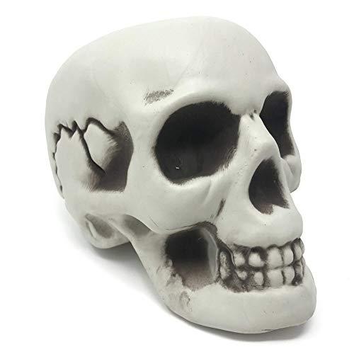 OULII Cr/áneo Humano Modelo Calavera Resina Decoraci/ón de Halloween