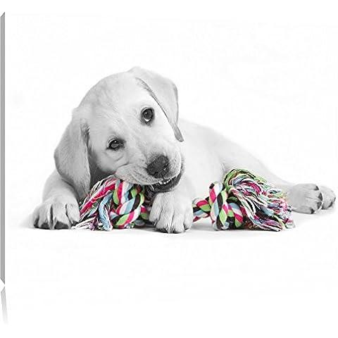 cucciolo di labrador che giocano in bianco / nero Dimensioni: 100x70 su tela, XXL enormi immagini completamente Pagina con la barella, stampa d'arte sul murale con telaio, più economico di pittura o un dipinto a olio, non un manifesto o un banner,