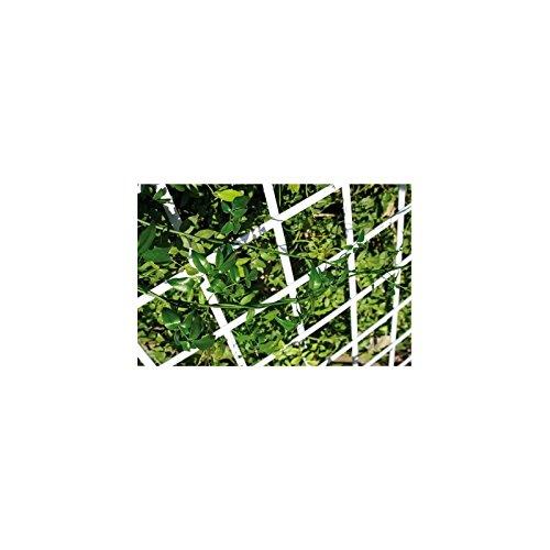 Catral 43060006 Jalousie pvc extensible deco