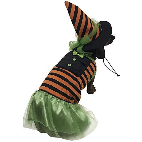 BFF Costumes Hexenkostüm für Kleine Hunde, Orange, Large