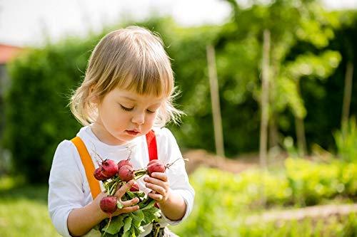 """Happy Garden -""""Round ravanelli"""" - Semi che i bambini possono coltivare! - 400 semi"""