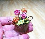 Virtue Mini Geranium Blue Pflanzen Bonsai Blume mehrjährige Blume Pelargonie Peltatum Topf Miniatur Geranie für Home Garde: Gelb