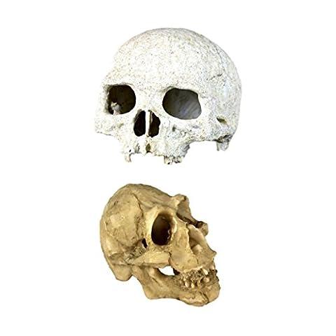 Gazechimp 2PCS Crâne de Humain Paysage dans Aquarium de Poisson