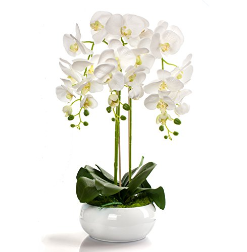 Orchideen-Arrangement 20 cm