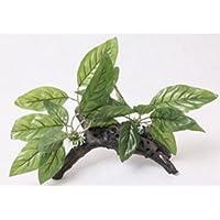 Planta Piantina hojas de seda tronco Terracota Acuario Terrario