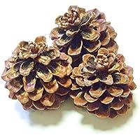 Pinien Zapfen groß 7-10 cm/3 Stück/Pinienzapfen natur/Weihnachts- Deko/Weihnachtsgeschenke/ Winter Deko