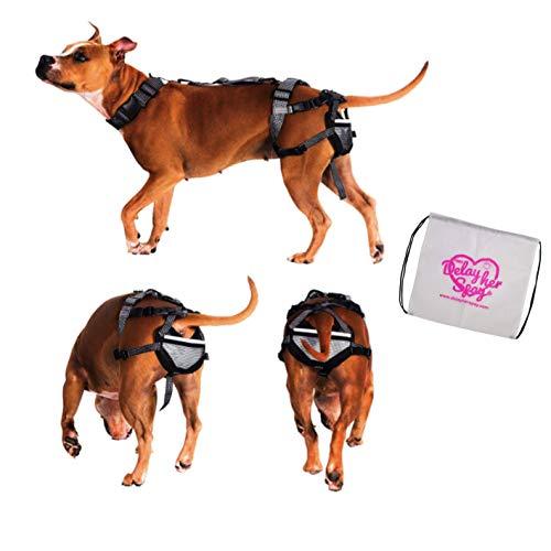 PABS für Haustiere System die ultimative Keuschheitsgürtel für Hunde, groß