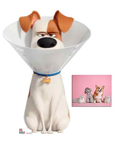 BundleZ-4-FanZ Max Wearing Cone Collar The Secret Life of Pets 2 Pappfiguren/Stehplatzinhaber/Aufsteller Fan Pack, 92cm x 67cm Enthält 8X10 (25X20Cm) starfoto -