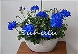 Hot Sale 50PCS 100% True Geranien Samen Getopfte Balkon Pflanzen Jahreszeiten Rare Pelargonium Blume Samen Topfpflanzen für Innen-Bonsai 7