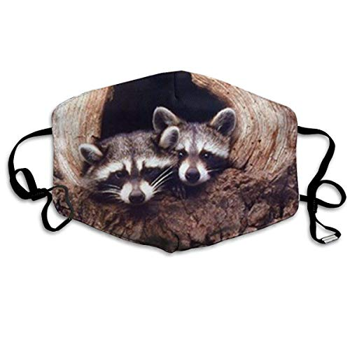Baby Raccoon Sitting In A Tree Hole Wild Animal Fashion Reusable Cotton Face Dust Mouth Mask,Washable Outdoor Sports Face Masks with PM2.5 Carbon Filter Masks for Pollen,Flying,Allergies,Smoke, -
