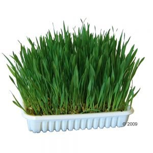 nibble-grass-seeds-for-rabbits-or-small-pets-comes-with-dish-soil-mineral-substitute-multi-buy-disco