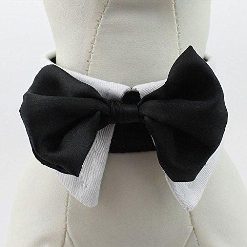 Art Und Weise Liebenswert Haustier Hund Katze Krawatte Kragen – Weiß, XXL - 2