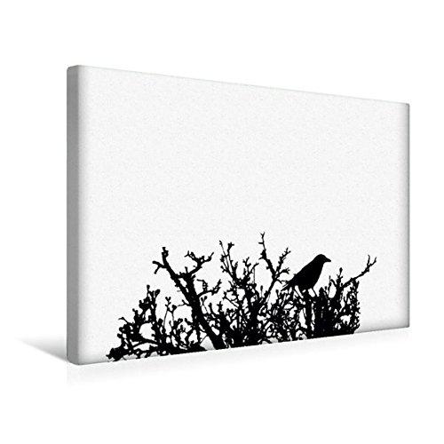 Premium Textil-Leinwand 45 cm x 30 cm quer, Deutsches Sprichwort - Weiße Raben | Wandbild, Bild auf Keilrahmen, Fertigbild auf echter Leinwand, Leinwanddruck (CALVENDO Kunst)