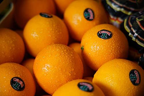 Orangen Frisch - Direkt Vom Erzeuger - Frisch Und Saftig 15kg - Obst frisch - Fitness Presse - Presse Zitrus - Vitaminreiche Ernährung - Juice Presse - Zitrusbilliger