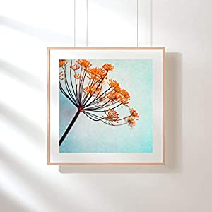 Fotografie Print Kunstdruck 12x12cm Dill Blüte Flower